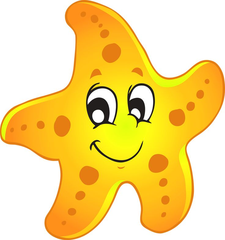 Starfish marine animal