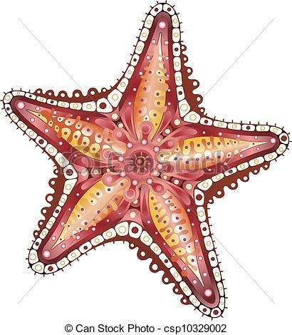 Starfish clipart star shaped object. Best images on pinterest
