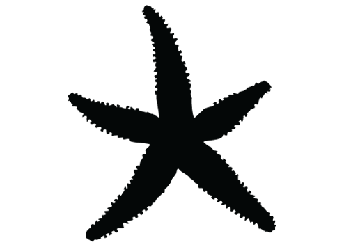 Starfish silhouette png. Collection of clipart