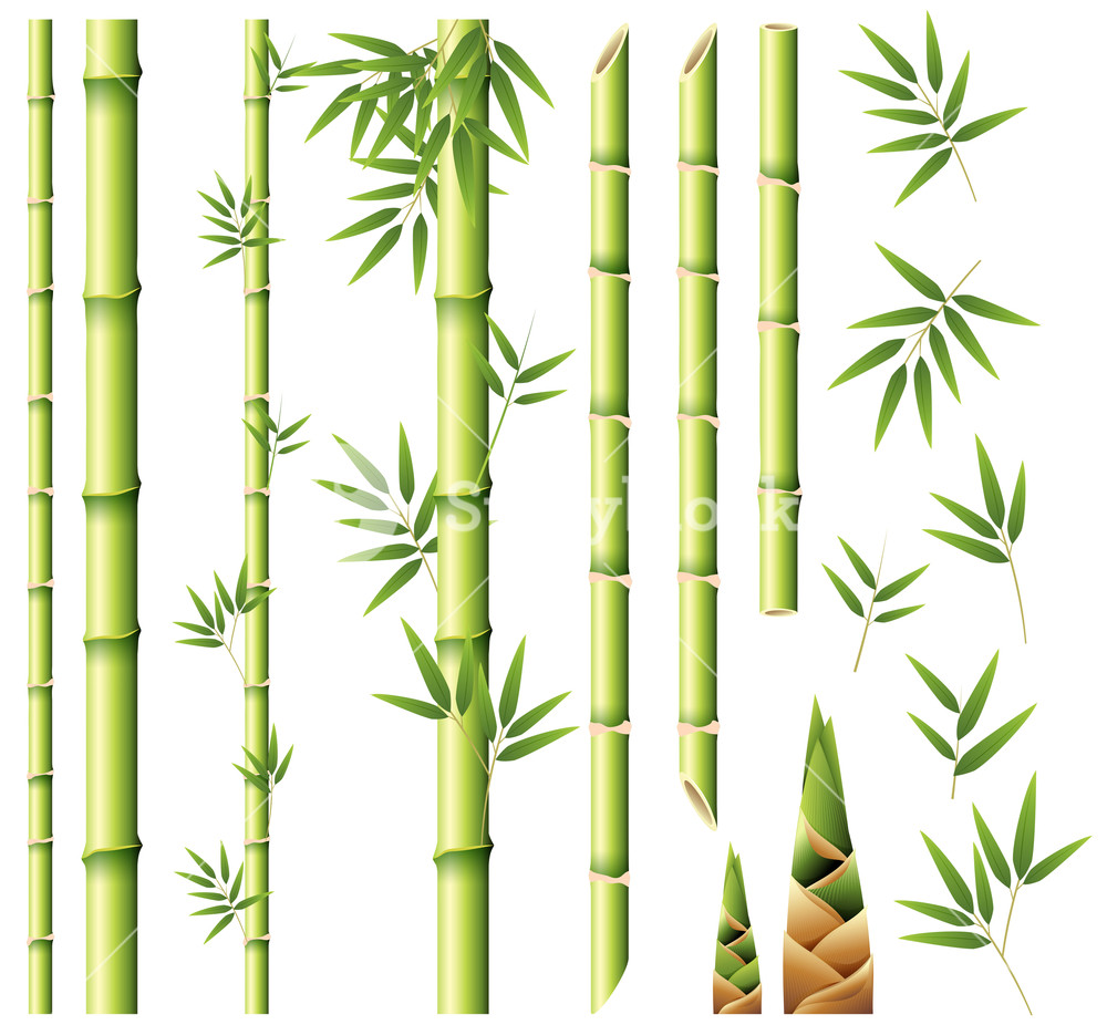 Stem clipart bamboo stick. Stems and leaves royalty