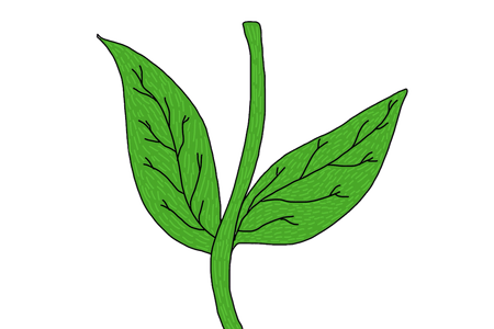Stem drawing flower. How to draw a