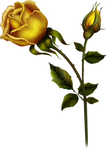 Stem drawing rose bud. Yellow with png clipart