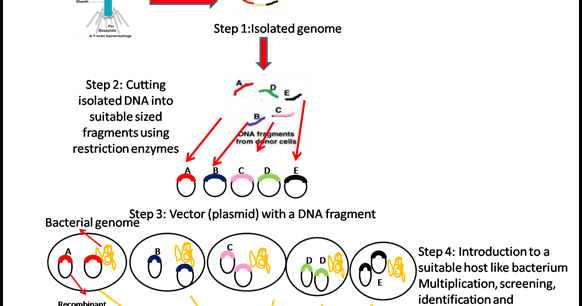 Steps vector step 1. Genomic library definition and