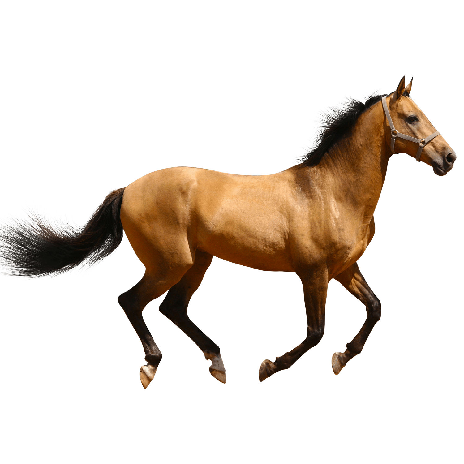 Stick figure horse png. Running brown sideview transparent