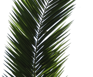 Stickers transparent plant. Images about on