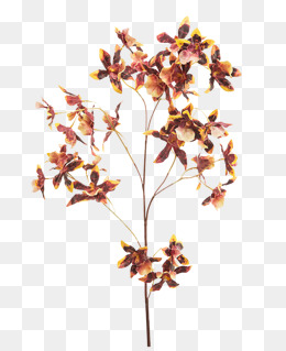 Sticks clipart dry. Dried flowers png vectors