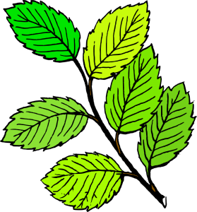 Sticks clipart twig leaves. Free cliparts download clip