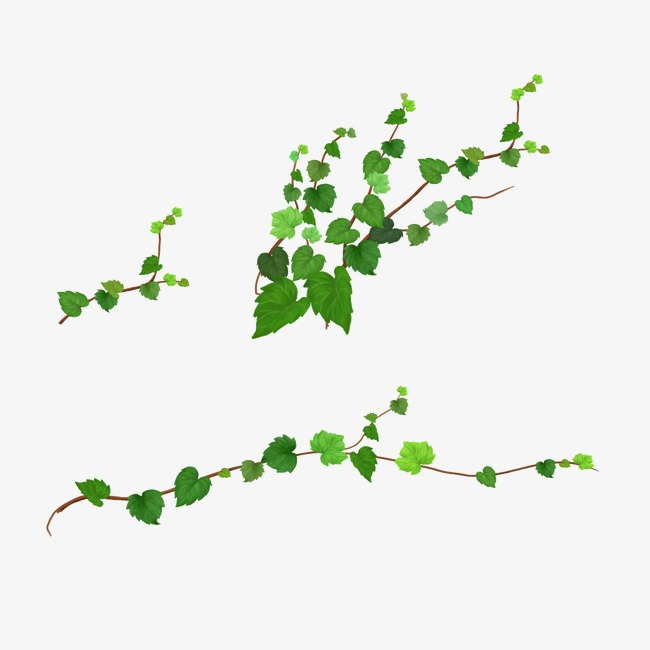 Twigs png vectors psd. Sticks clipart twig leaves banner library stock