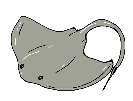 Stingray clipart easy draw. Drawing comment cute pinterest