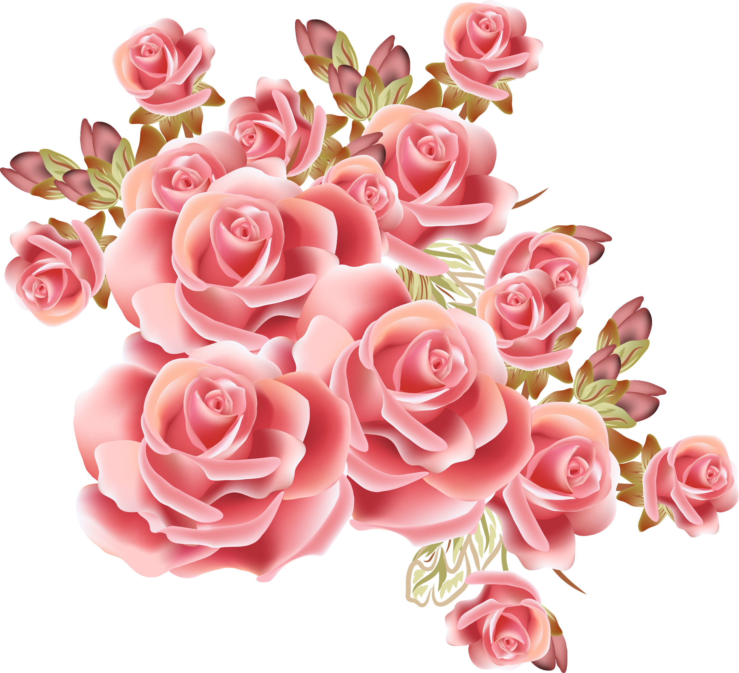 Stock drawing flower. Rose photography dream pink