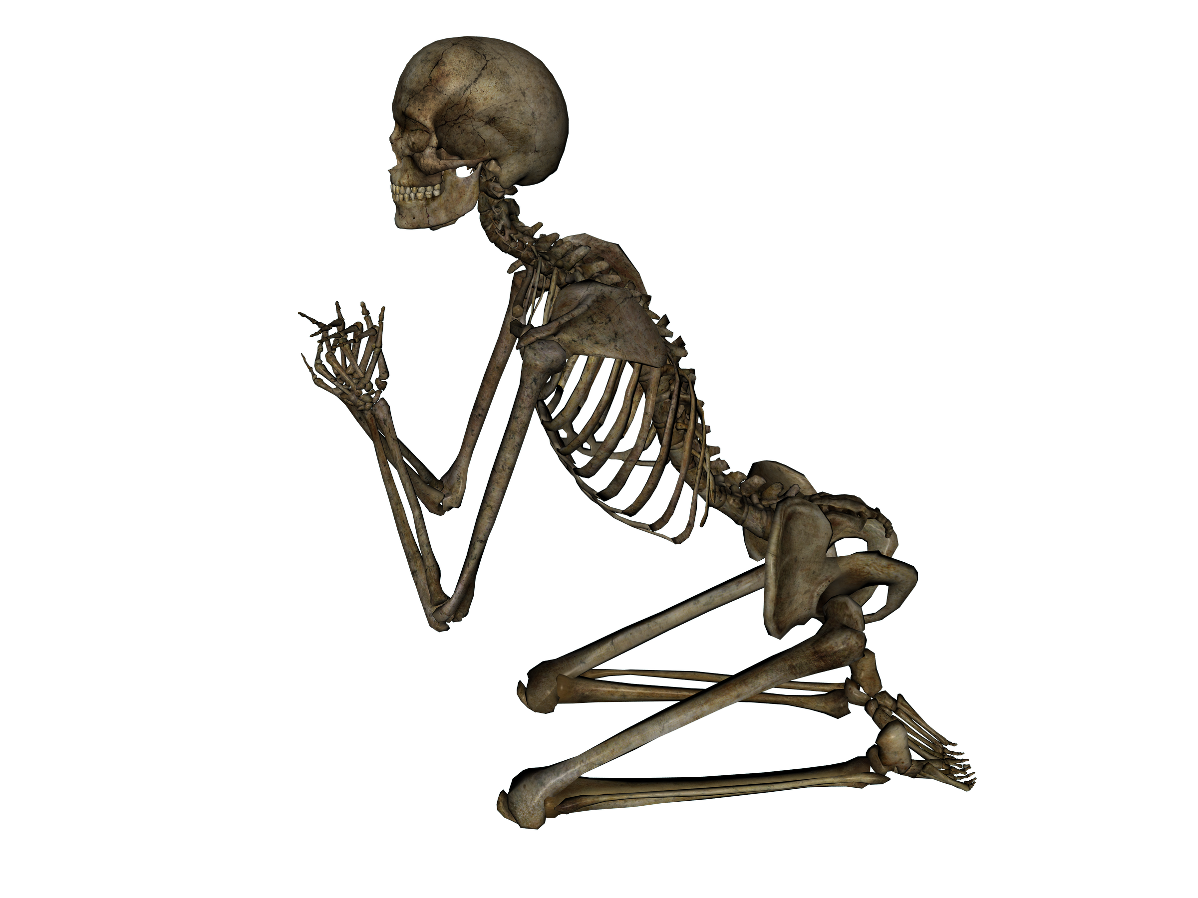 Stock images png. Human skeleton eleven isolated