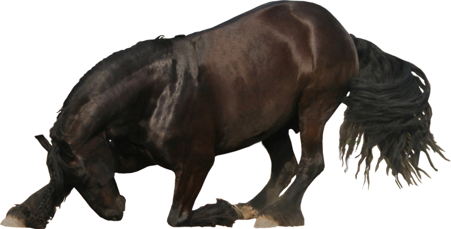 Stock images png. Friesian image by nexu