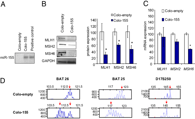 Stomach vector empty. Stable clones with overexpression