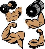 Panda free images info. Strength clipart muscular strength picture free download
