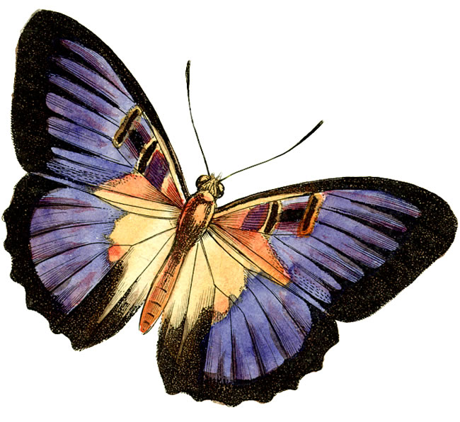 Animal clipart butterfly. Stretch real free