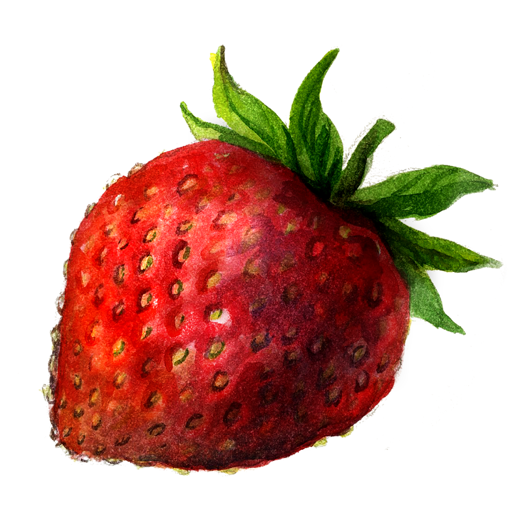 Stroke drawing berry. Collection of free strawberries