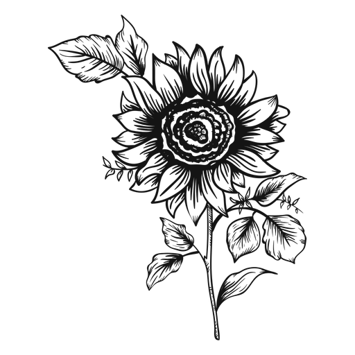Stroke drawing sunflower. Icon transparent png svg