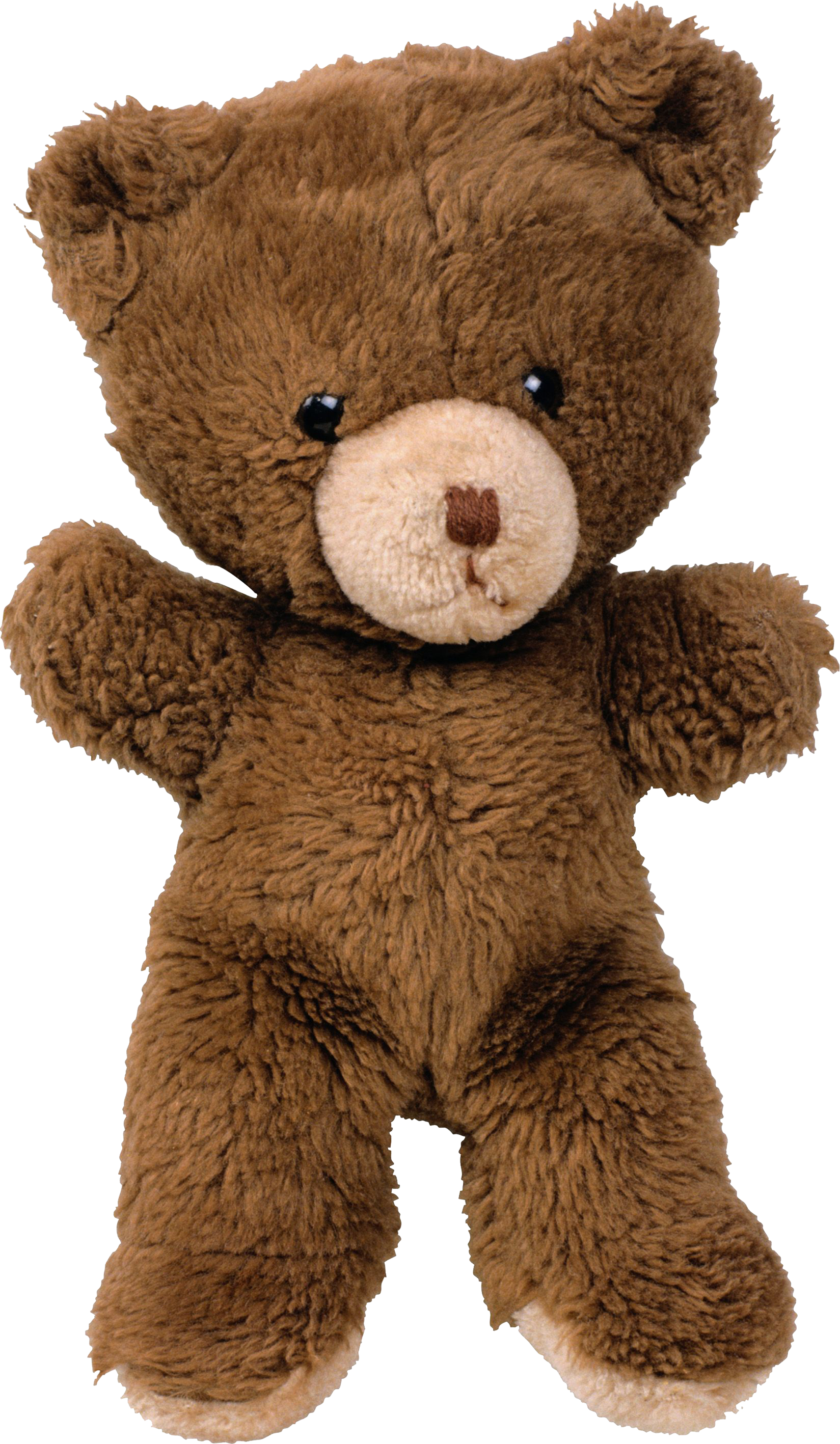 Cute bear png. Teddy five isolated stock