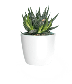 Indoor plant png. A small houseplant in