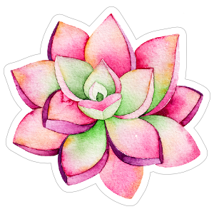 Watercolor succulent png. Pink and green sticker
