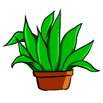 Aloe drawing green plant. Succulent plants png images