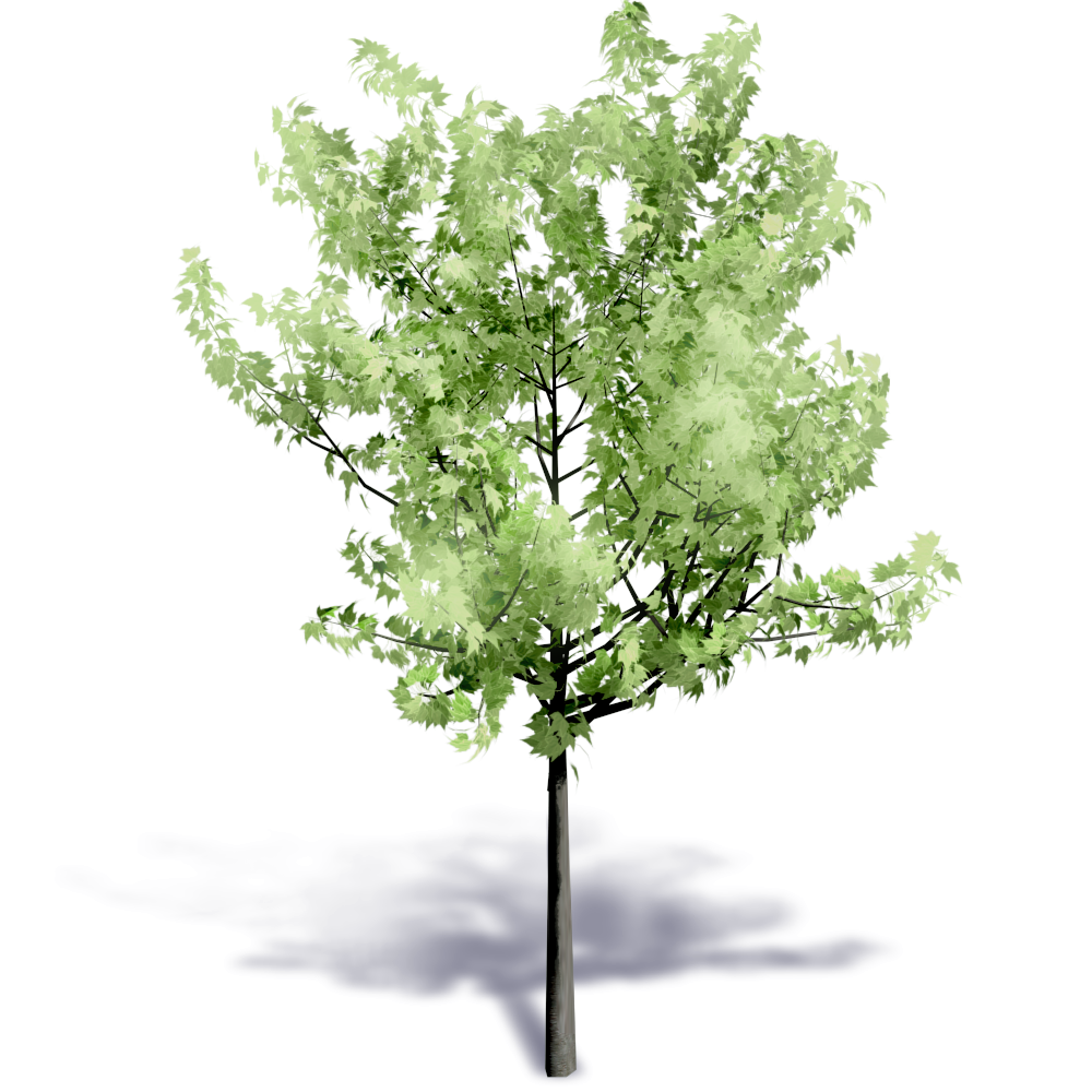 Summer tree png. Cad and bim object