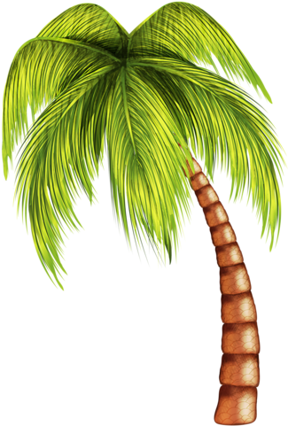 Summer tree png. Tropical clipart coconut x