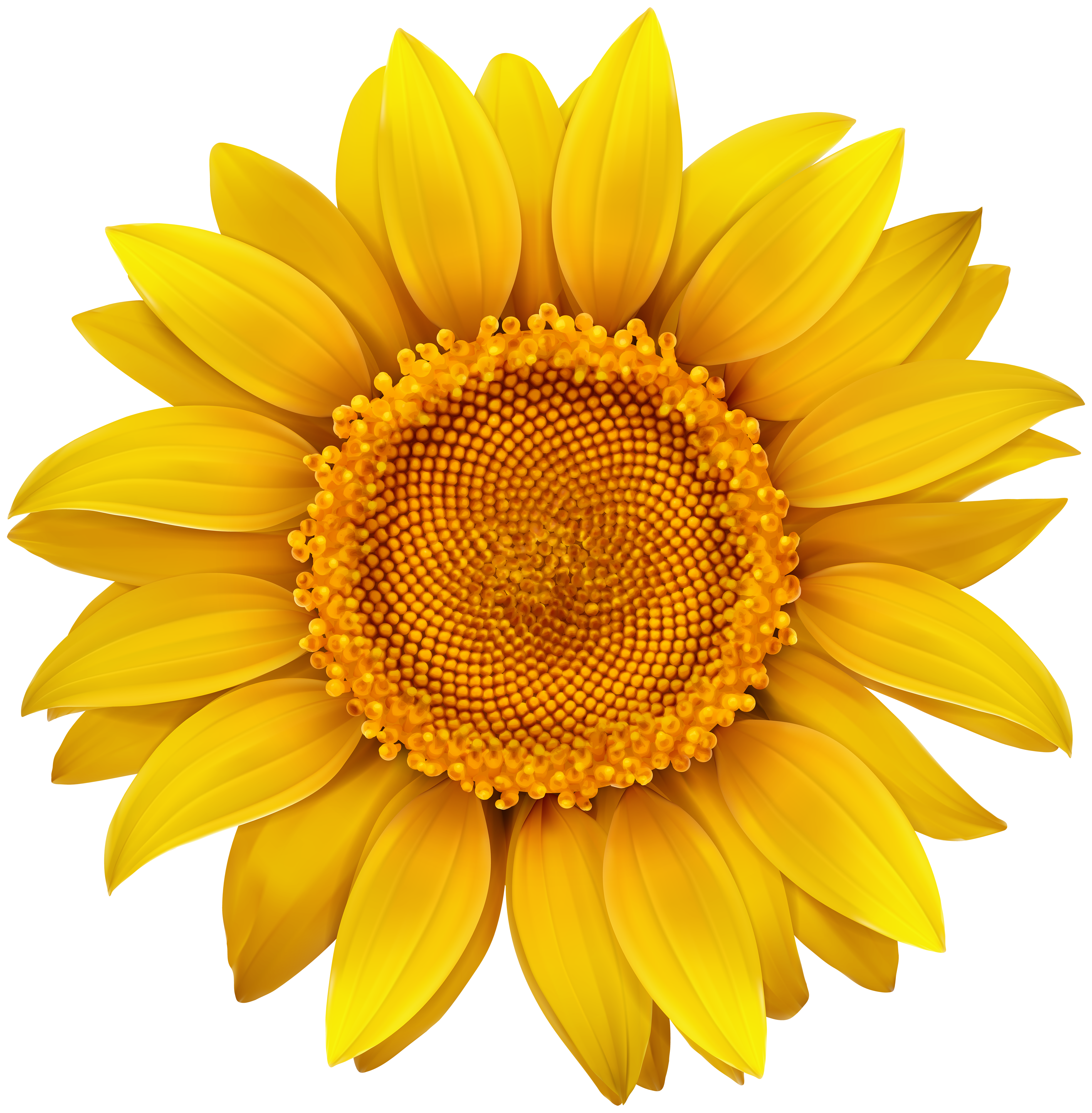 Sun flower png. Sunflower image gallery yopriceville