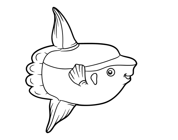 Ocean crazywidow info. Sunfish drawing clip library library