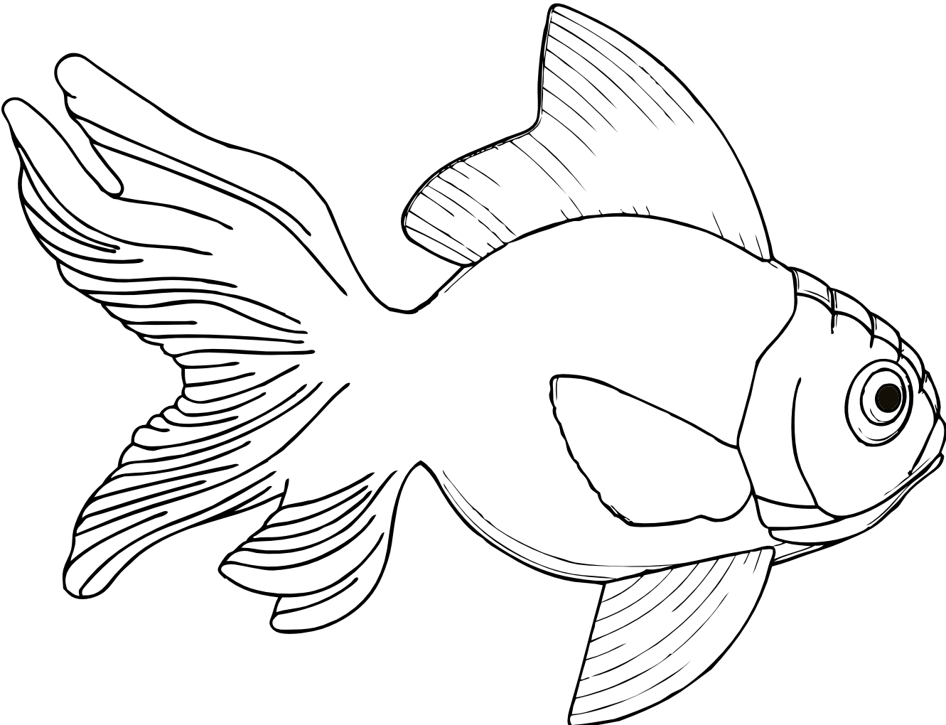 Sunfish drawing art. Clipart fish line pencil