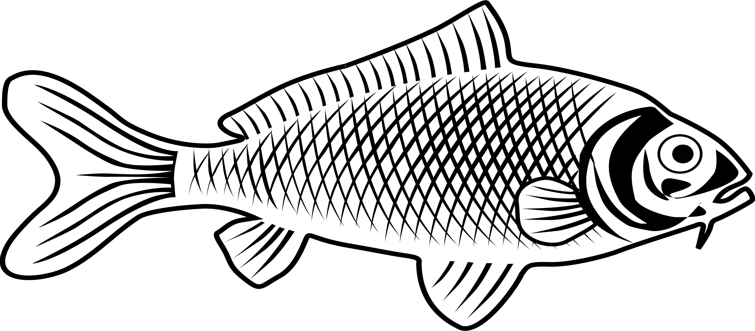 Sunfish drawing fishline. Collection of fish