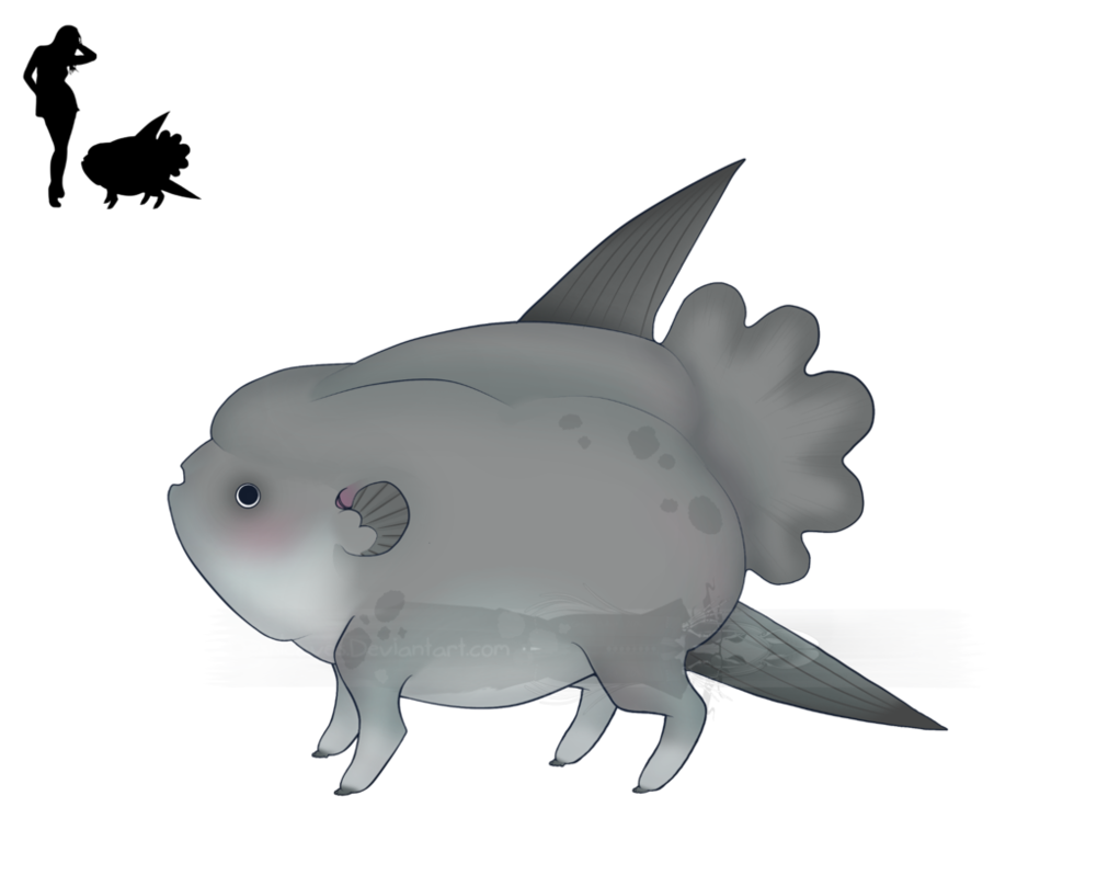 Sunfish drawing mola. Puddlesqueak by deskleaves on