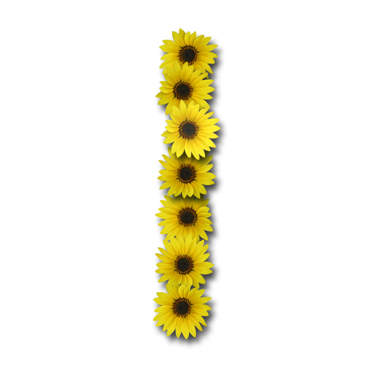 sunflower alphabet png