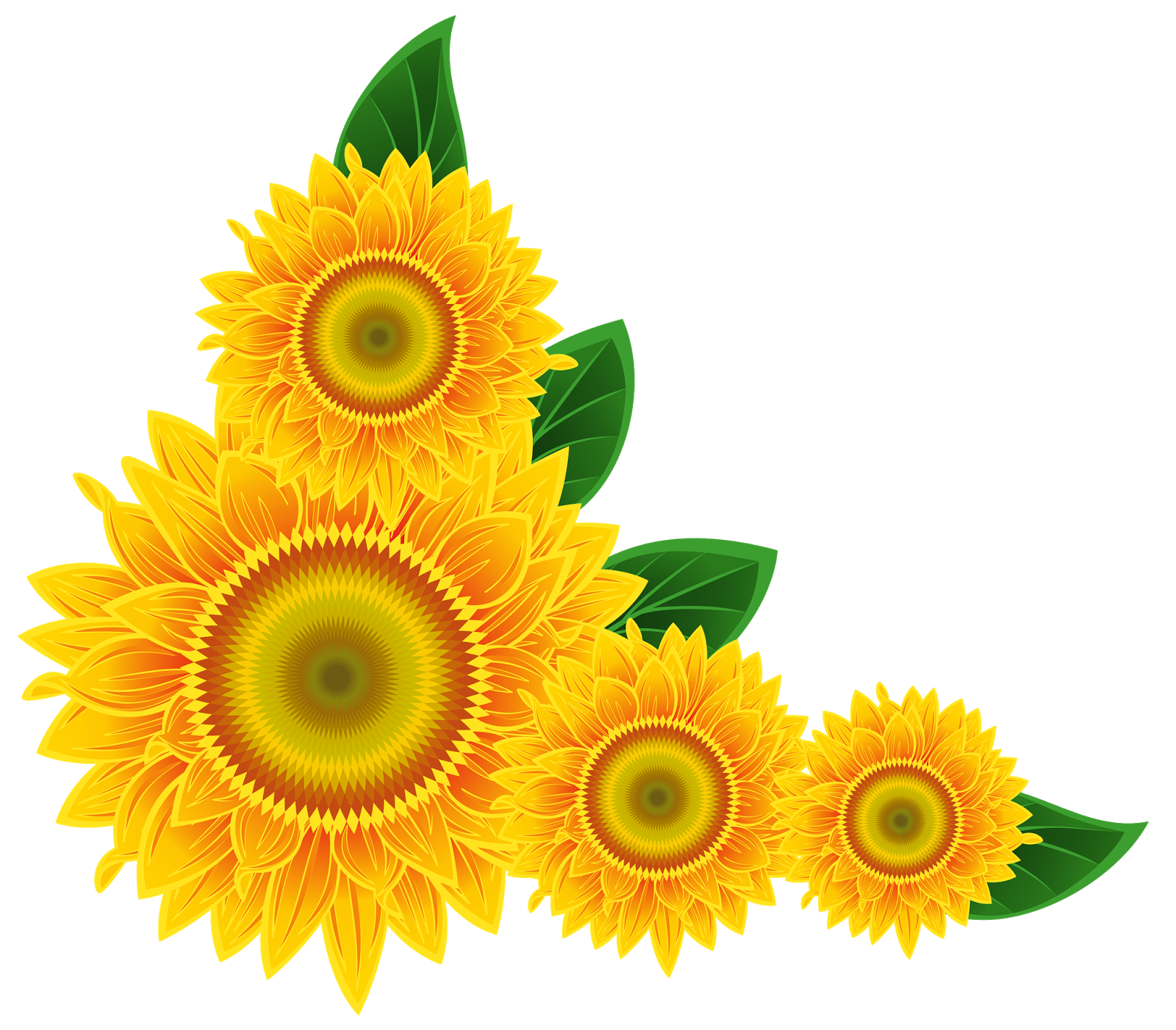 Sunflowers png blue. Sunflower transparent pictures free