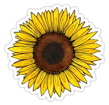 sunflower clipart aesthetic