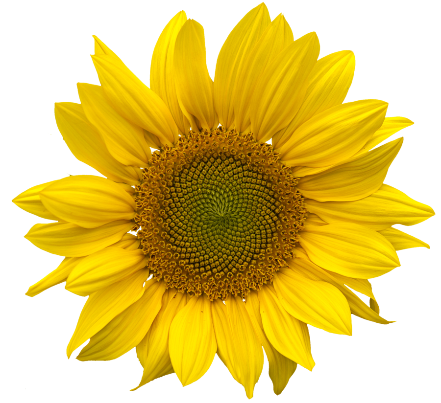Sunflower clipart aesthetic. Yellow flower niche moodboard
