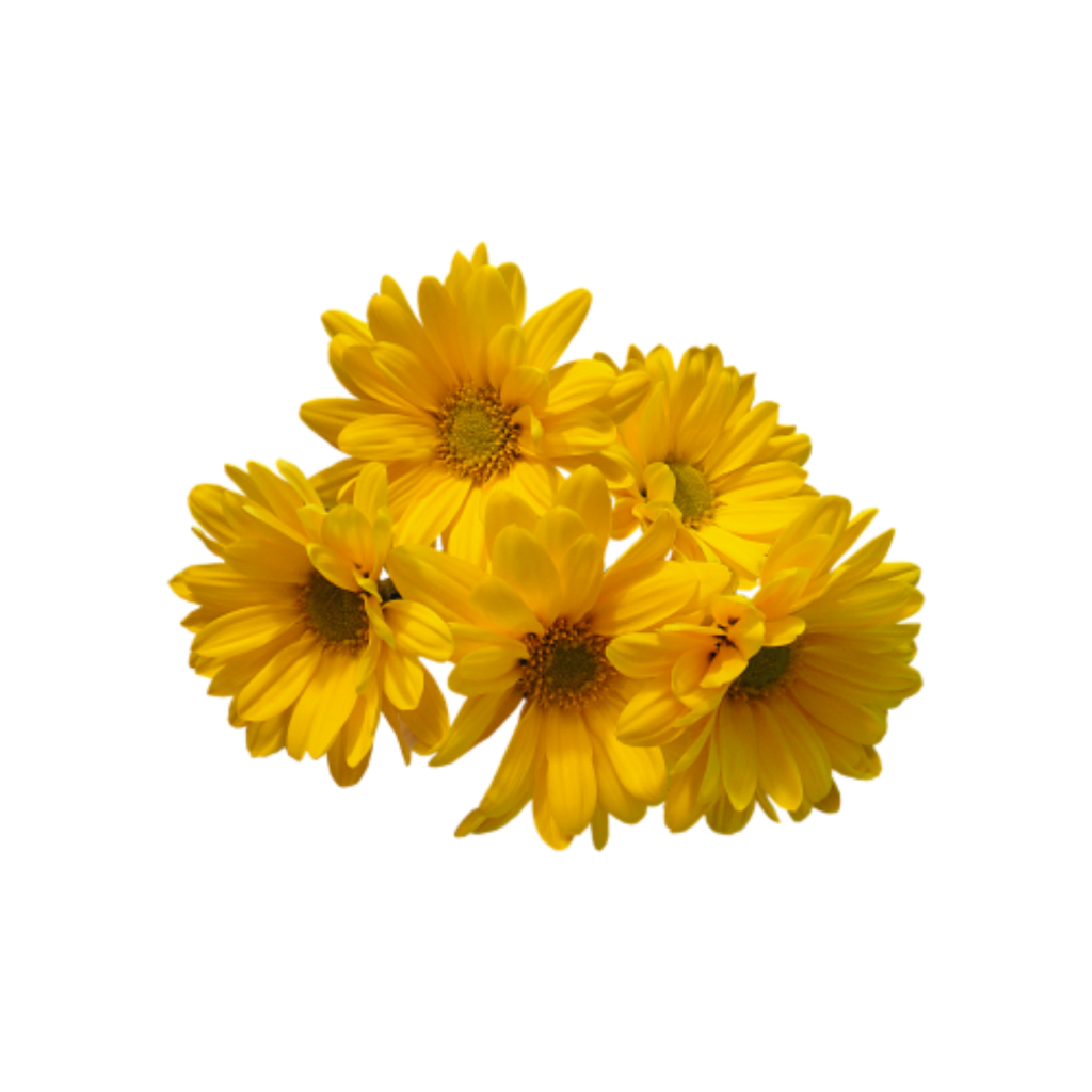 Aesthetic flowers png. Flower yellow tumblr