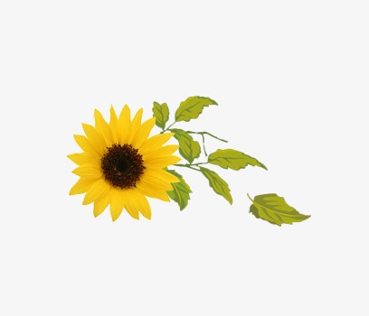 Sunflower clipart aesthetic. Exquisite flower leaves beautiful