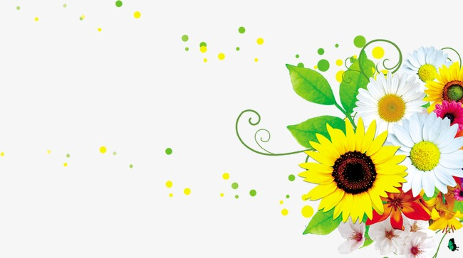 Sunflower clipart cluster. Flowers flower png image