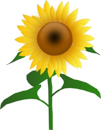 Sunflower clipart diagram. Free clip art with