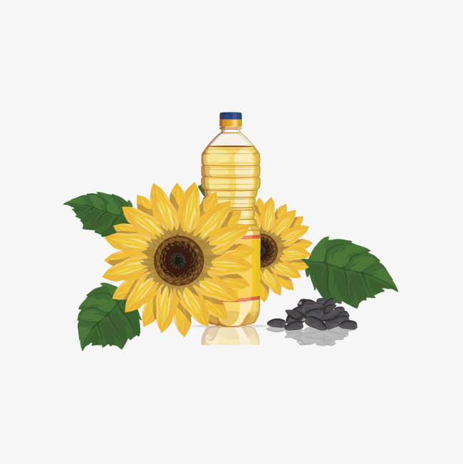 Sunflower clipart diagram. Vector oil and png