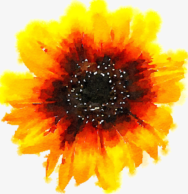 Sunflower clipart diagram. Yellow flowers vector png