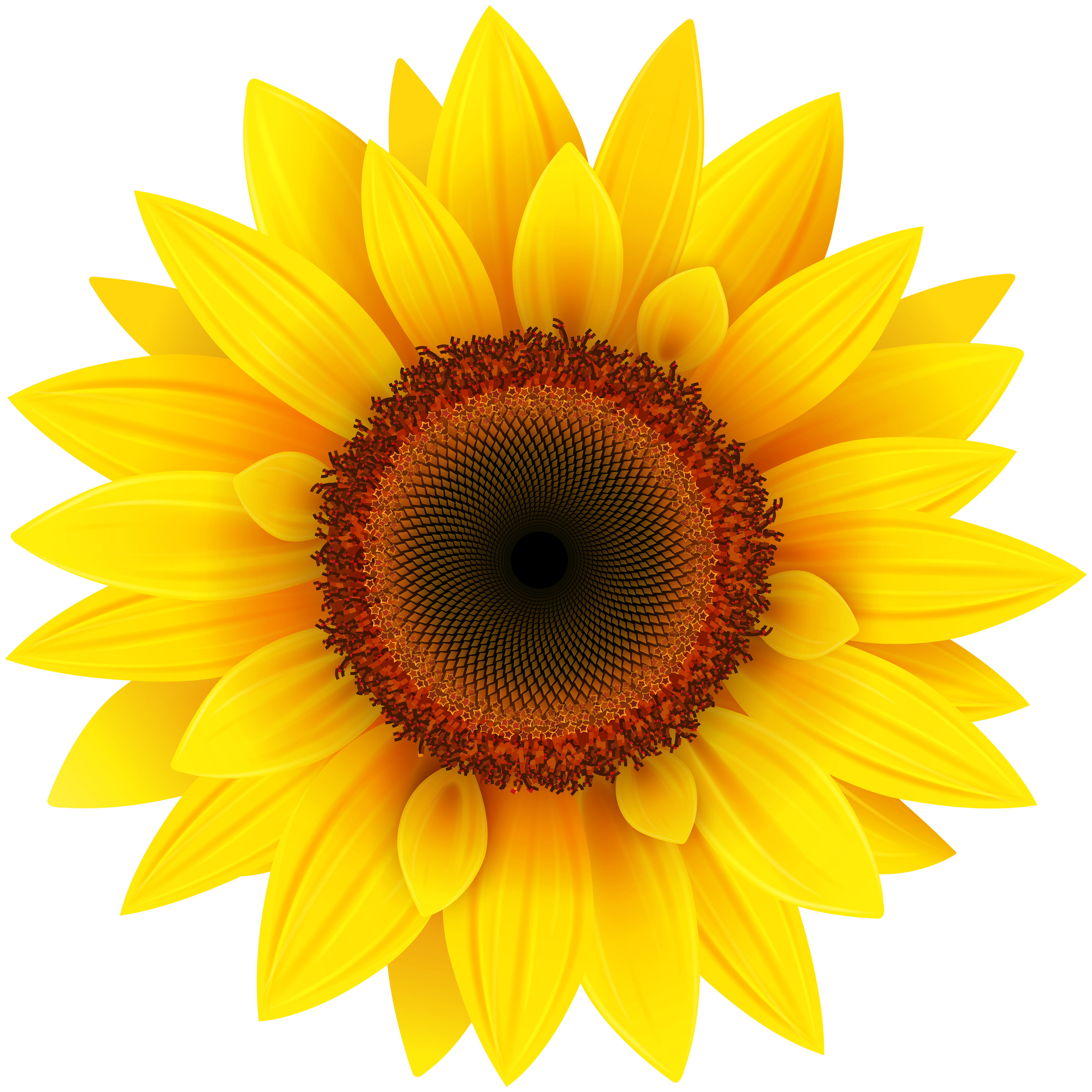 Cute sunflower png. Clipart picture gallery yopriceville