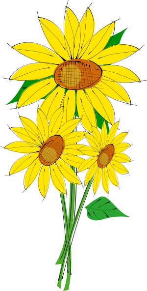Sunflower clipart single sunflower. Transparent png pictures free