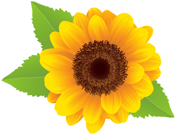 Sunflower clipart single sunflower. Png transparent images pluspng