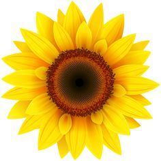 sunflower clipart sun flower