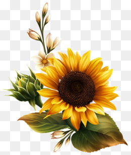 Sunflower clipart sun flower. Png images download resources