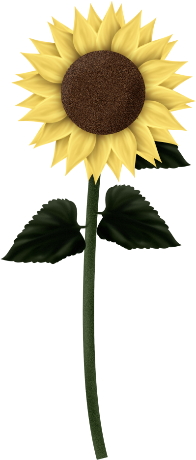 Sunflowers png tall. Download clipart sunflower transparent