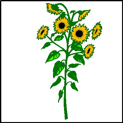 Sunflower clipart tall sunflower. Clip art panda free