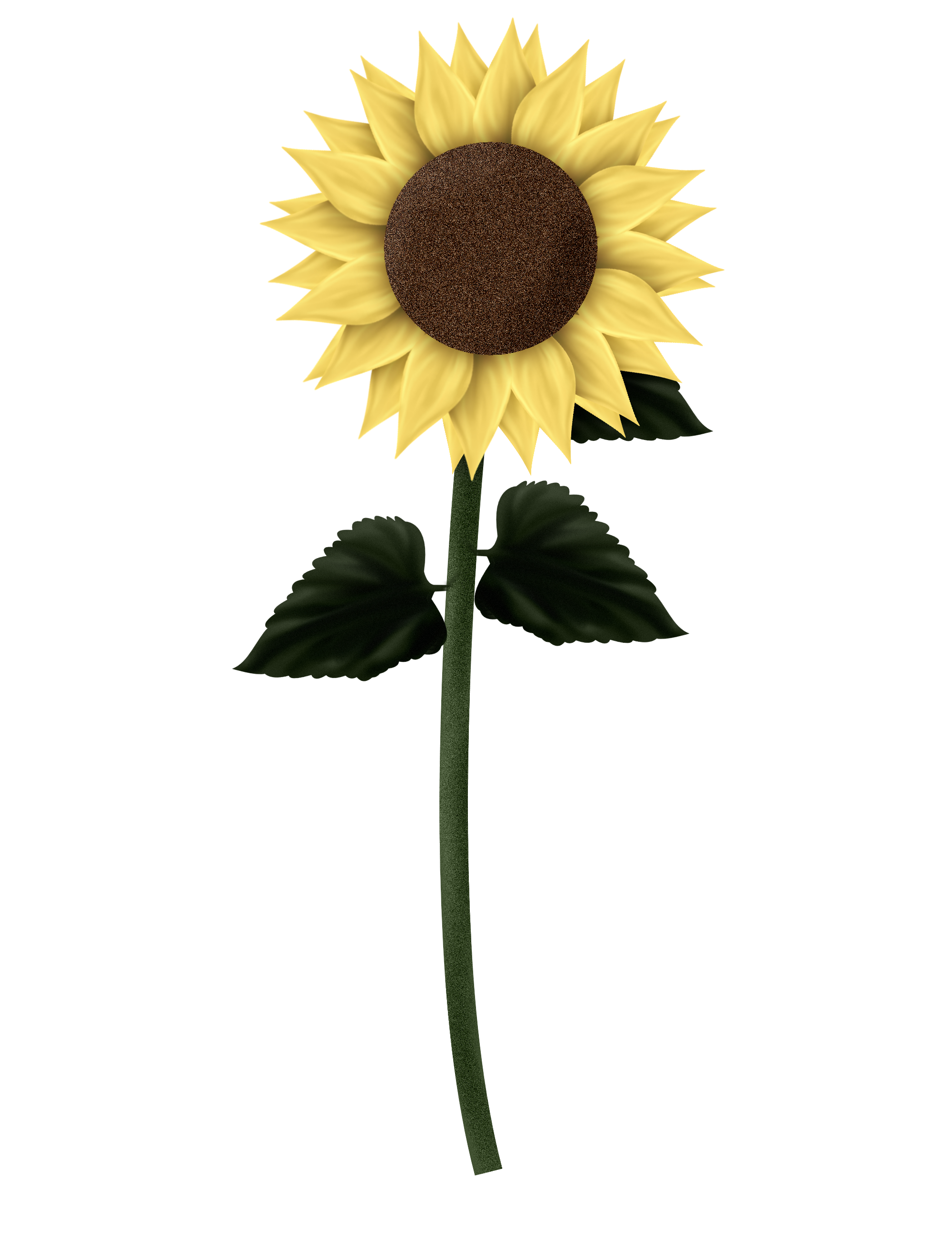 sunflowers png leave